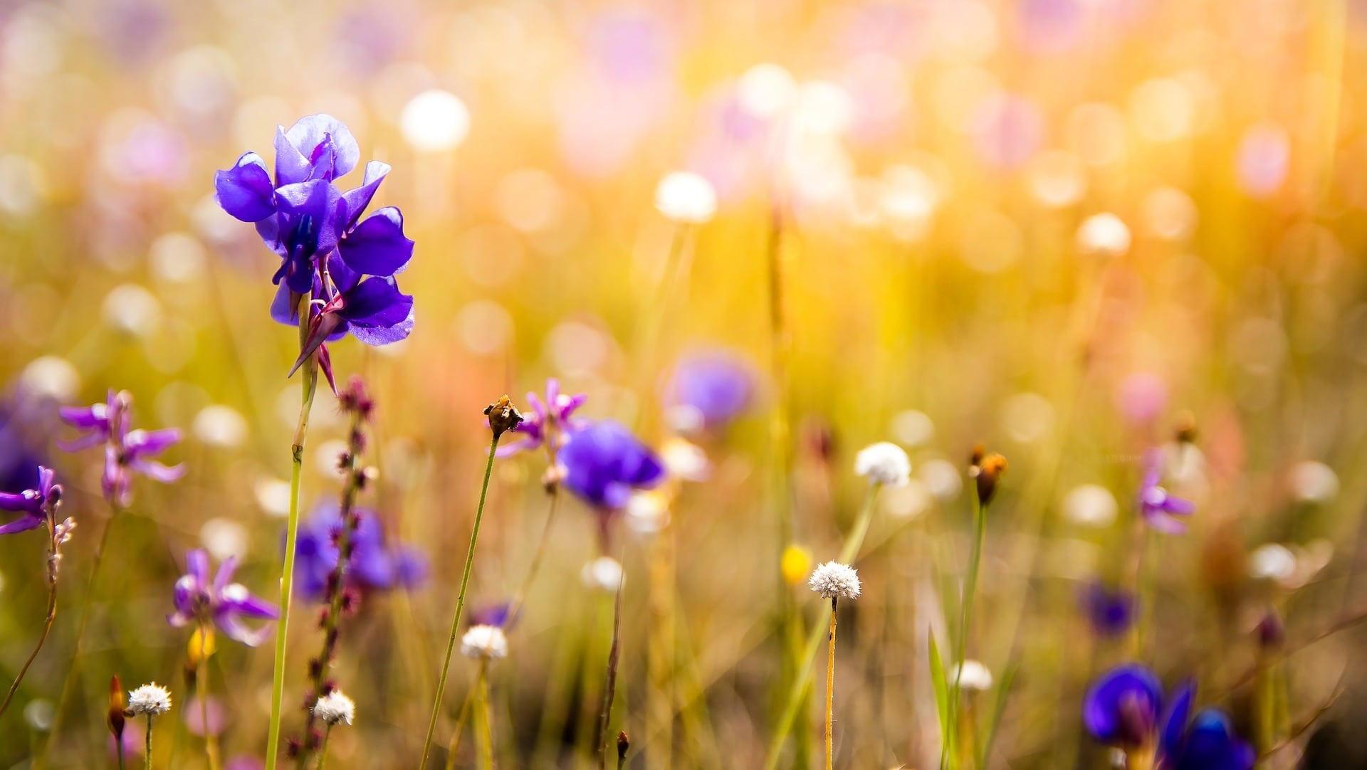 Bei der Wilden Pracht bekommst du Blühpatenschaften