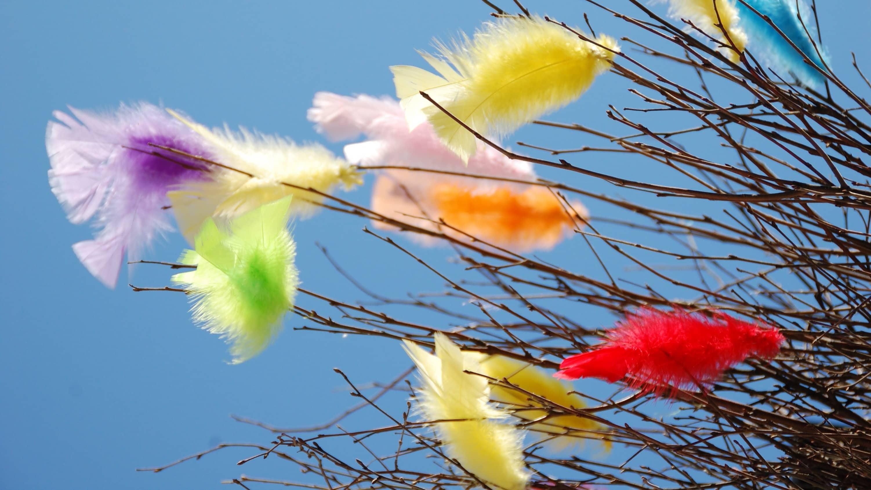 Zweige mit bunten Federn an Ostern in Schweden